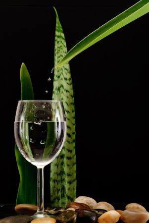 satisfying: Fresh Clean Water From Leaf Onto Wine Glass