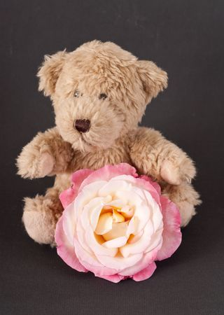Small Brown Bear with White and Pink Rose photo