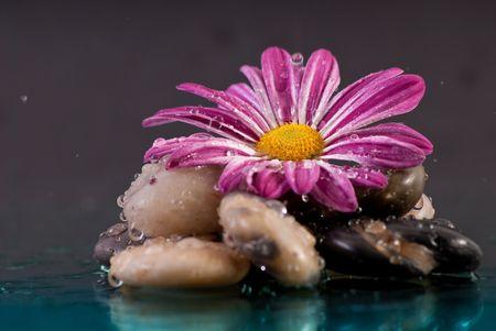 Paarse bloem op rotsformatie met vallende regendruppels