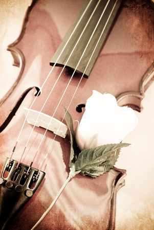 Violin and a Rose in Grunged Texture photo