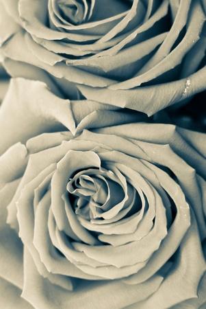 soul mate: Aged Roses