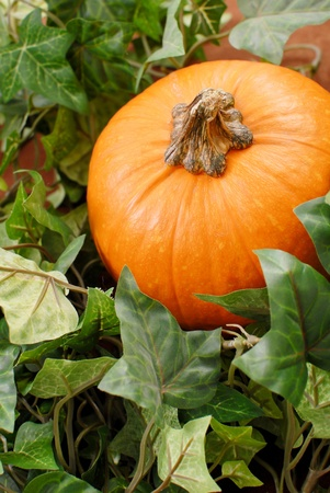 hollows: Pumpkin in the Midst of Leaves