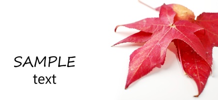 plantlife: Autumn Leaves with Space for Text Stock Photo