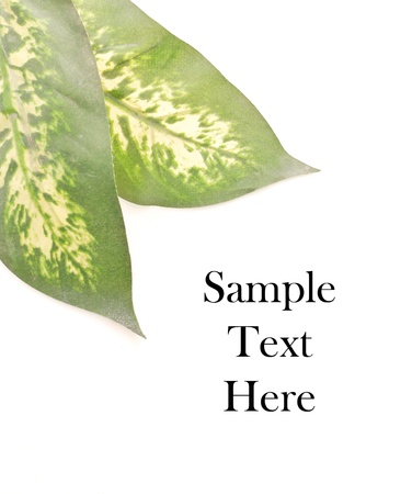 fern  large fern: Leaf with Space for Custom Text