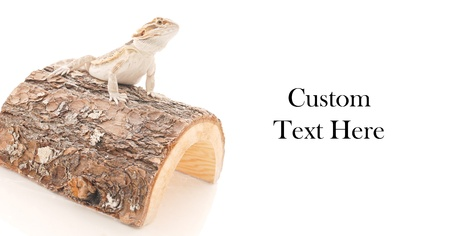 Juvenile Bearded Dragon Sitting on Wood with Space for Text photo
