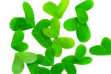 clover leaf parts on a white background Stock Photo - 2761789