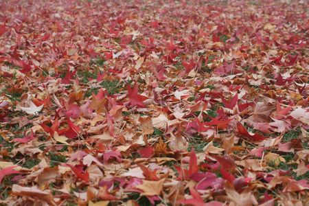 Many colorful fall leaves on the ground Stock Photo - 3905556