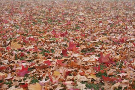 Many colorful fall leaves on the ground