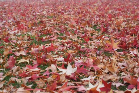 Many colorful fall leaves on the ground Stock Photo - 3905557