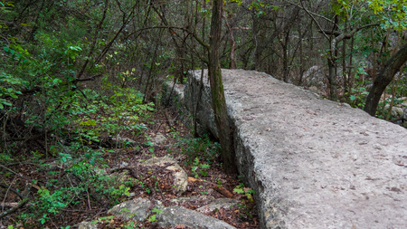 Flat runway rock outcropping in forest