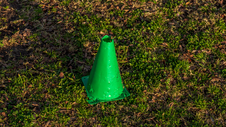 Small green cone in a field of grass during the golden hour of sunset