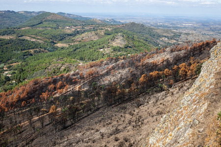 trees burned after the fire in the bush. Marvao, Alentejo, Portugal