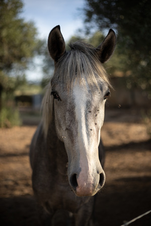 a portrait of a beauty horse with flying flies