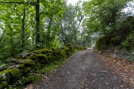 path in the green forest. Chestnut forest of Montanchez, Caceres, Extremadura, Spain Archivio Fotografico