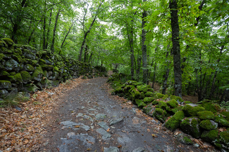 path in the green forest. Chestnut forest of Montanchez, Caceres, Extremadura, Spain Banco de Imagens