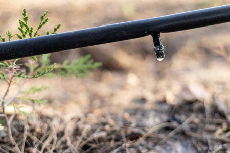 Cerrar el sistema de riego por goteo
