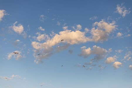 blue sky with clouds and birds flying