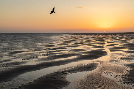 sunset on the beach with a seagull flying by backlight Reklamní fotografie