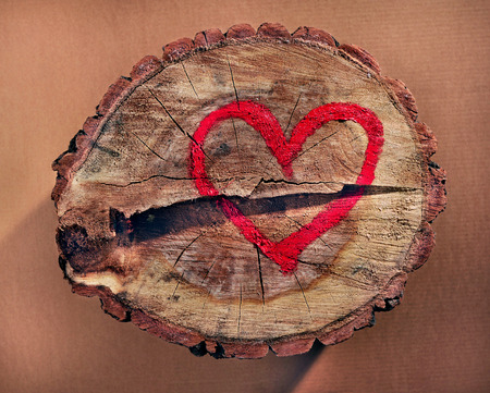 stop global warming: Love and save nature, red heart drawn on a tree trunk  Help to protect nature, stop deforestation