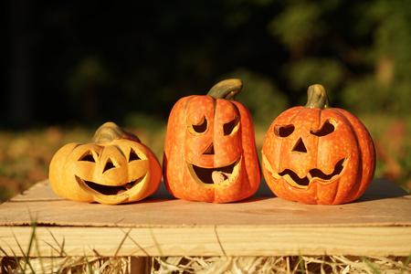 Cute pumpkins outdoors