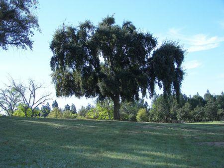 Tree on a Hill Standard-Bild