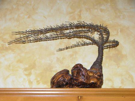 cypress tree: copper cypress tree