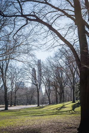 Central Park woodland landscape overlooking the city with late winter tree branches in NY