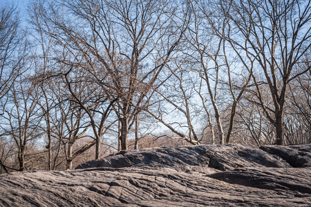 Landscape of the rocks of Central Park overlooking the woods with the branches of the trees without leaves of the end of the winter in NY Stock Photo