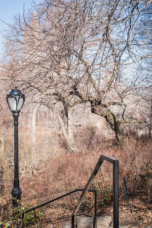 Path to Central Park Lake through leafless branches of bushes at the end of winter in NY
