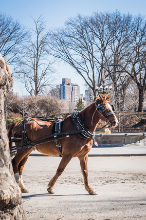 Royal horse carriage rides in Central Park on the fountain square with the branches of the naked trees of late winter in NY