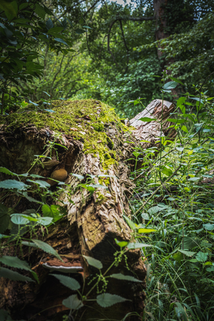 Stump of a frothy tree trunk isolated in the vegetation of the lush forest