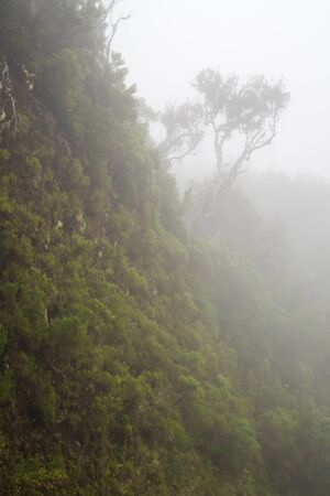 The tree of the cliff in the mist of the clouds on the island of Madeira