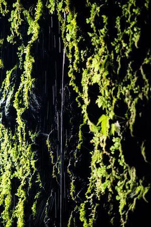 Wet green moss on the wall of a cave in Madeira