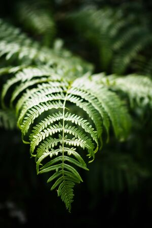 Forest green fern in summer 스톡 콘텐츠