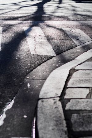 Shadows of trees rooted on the asphalt of the city