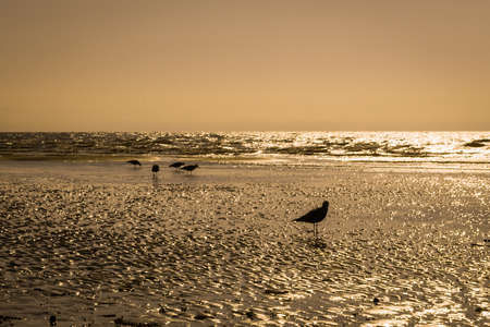 Group isolated pigeon on a beach at sunset Archivio Fotografico