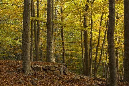 Autumn falling leaves colorful leaf Fall Autumn Forest landscape Banque d'images