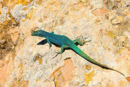 green lizard on a sunny rock summer