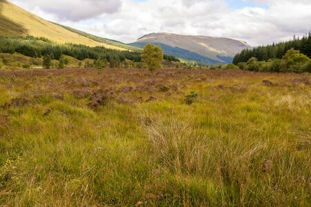 Field with grass pine trees and mountains in a summer and cloudy day in Highlands, Scotland 版權商用圖片