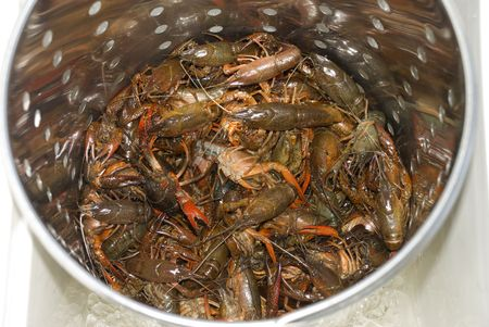 caldron: A caldron of live cray fish waiting to be boiled