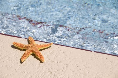 sun bathing: A colorful star fish sun bathing near a swimming pool on a bright sunny day Stock Photo