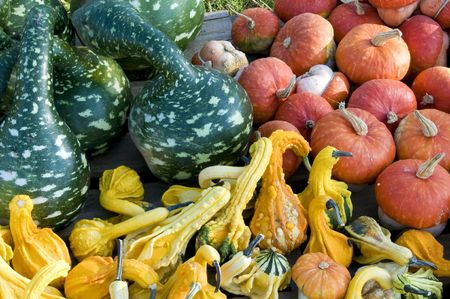 Pumpkin patch with a variety of pumpkins gourds and squash in different sizes and colors photo