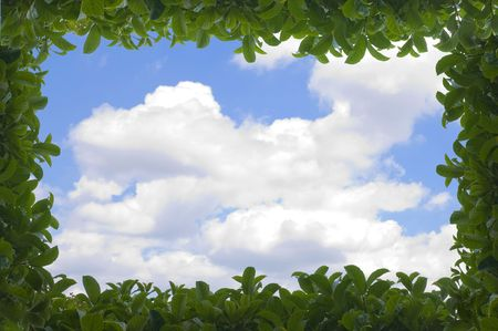 Green leafy hedge frame over a partly cloudy blue sky with text space