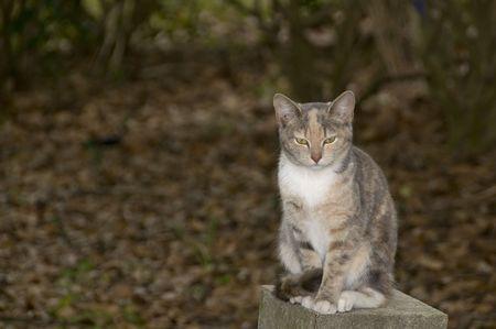 feral: Lone feral kitten on a concrete block