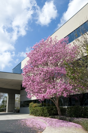 Hospital drive through with pink tree at entrance in springtime