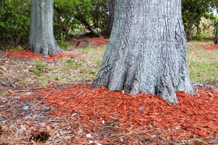 Redwood mulch around the base of Oak trees to help hold in moisture with shallow dept of field