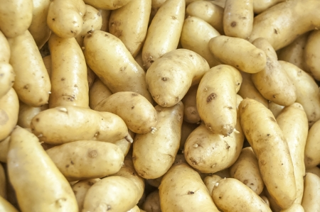 spud: White organic potatoes from a green farm for background