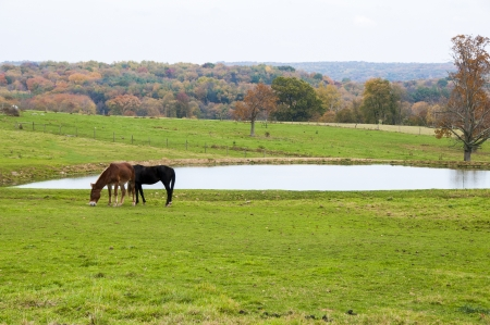 Two farm animals grazing near a lake during the fall season photo