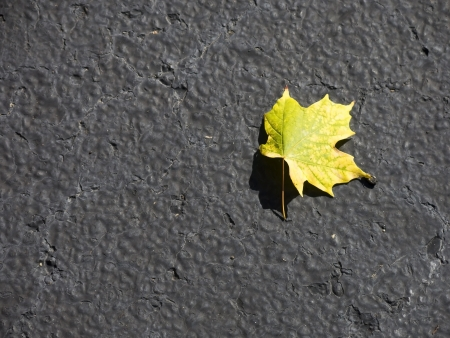 Single Maple Leaf on a Blacktop Surface Indicating the Approaching Autumn Season