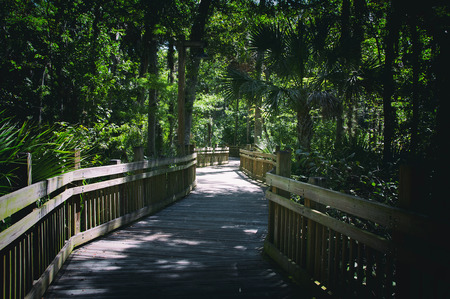 elevated walkway: Elevated wooden walkway over swamps in heavy wooded area